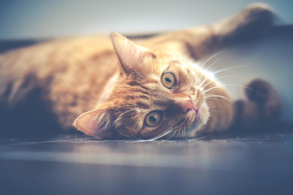 Beste Verdauungsenzyme für Katzen und ihre Vorteile