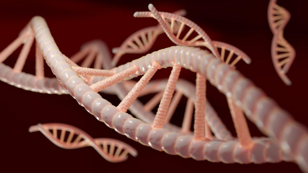 WARUM HABEN DIE MEISTEN MENSCHEN 23 CHROMOSOMENPAARE?